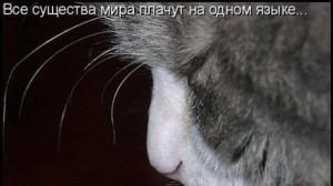 слезки кошки